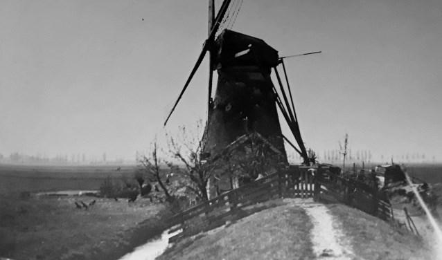 Watermolen 'de Pieterman', die hier nog volop in functie was. (Foto: Collectie Historische Vereniging Zwijndrecht).