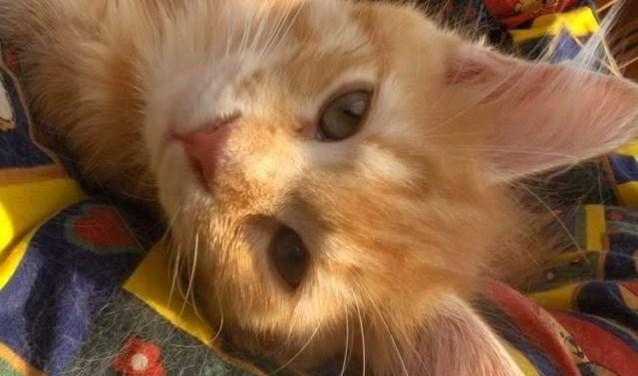 Kattenliefhebbers zijn van harte welkom. Eigen foto