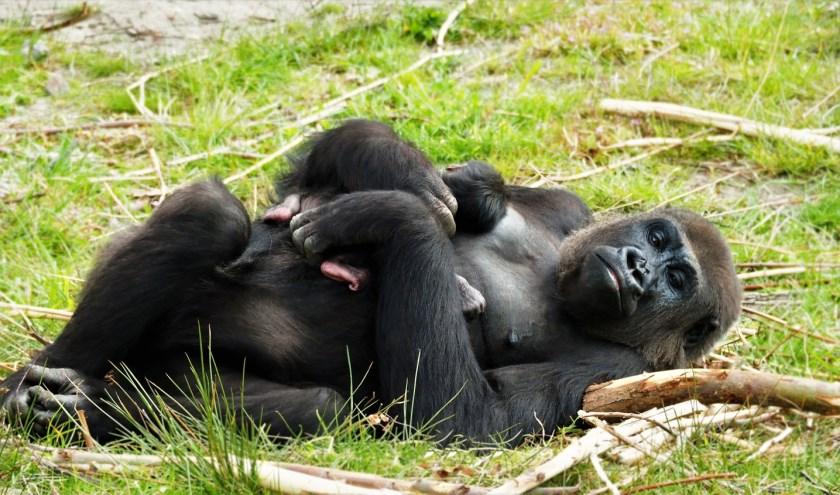 Het jong werd op 16 mei geboren. Wat de naam is van het dier is nog niet bekend.