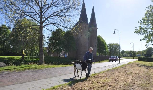 In de avond haalt André Kik zijn geit weer op en brengt hem naar zijn weitje. FOTO: Anneke Flikweert