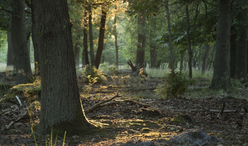 De boswachter neemt je op zaterdag 18 mei mee op een ontdekkingsreis in het bos.