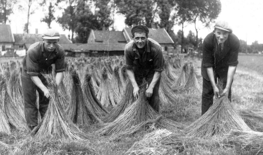 Enkele vlaswerkers aan het werk in de Achterambachtseweg.