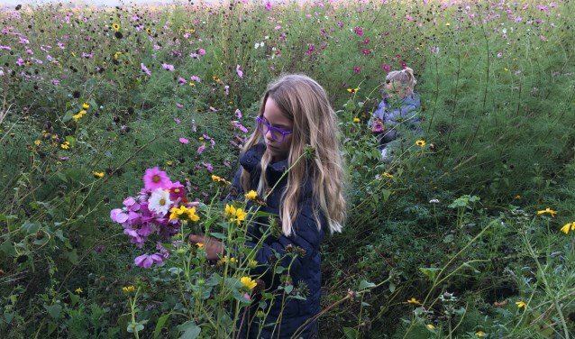 Kinderen struinen door de bloemrijke akkerranden. Foto: Jolanda Groeneberg, vrijwilliger Voedselbos Nieuwen Noord