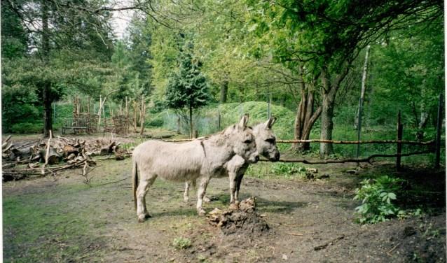 Karel (links) en zijn broertje Joop staan op de grond waar sindsdien honderden ezels zijn opgevangen.