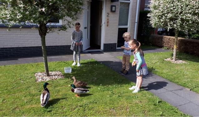 Alisa, Lianna en Lars begroeten de eenden. (foto: Anky van Alst)