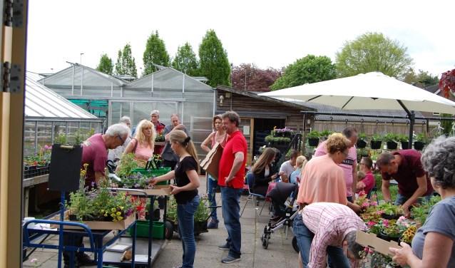 De Pimpernel heeft 60.000 planten op voorraad.