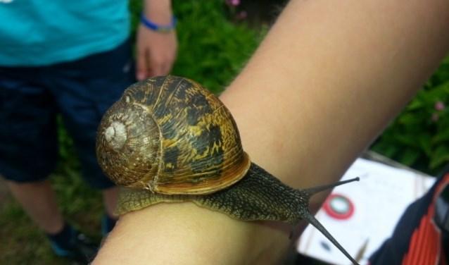 Ook slakken kunnen worden bekeken op de Scharrelkids-doedag voor kinderen.