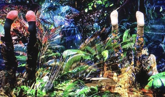 Ontdek een nieuwe wereld bij Botanical Wasteland.