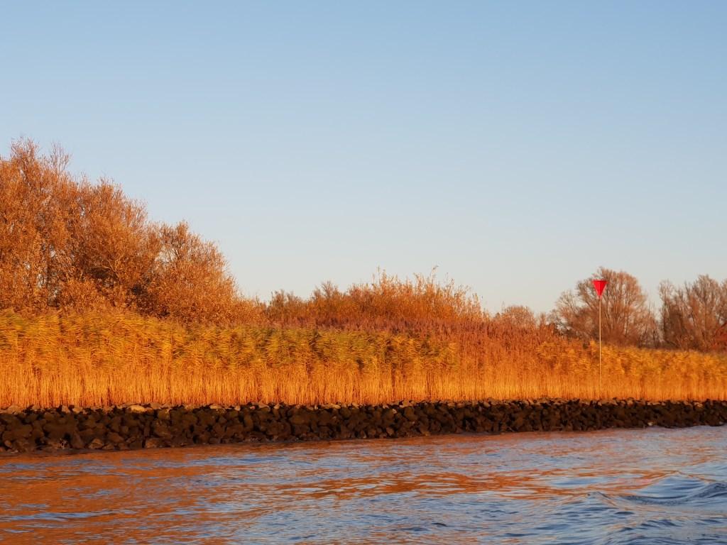 Wuivende rietkragen, gezien vanaf het water. Foto: Nora van Krimpen © Persgroep