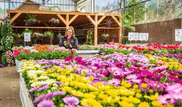 Een bloemenzee van prachtige zomerbloeiers tijdens het extra voordelige Perkgoedfeest op zaterdag 11 mei bij Tuinplantencentrum Van Krugten aan de Kooiweg 1a in Drunen. Foto: Yuri Floris Fotografie