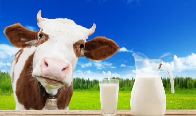 Knuffelen met koeien of alles te weten komen over jouw glaasje melk? Kom dan naar de Campina Open Boerderij Dag bij Melkveebedrijf De Vlottenburg in Babberich. (foto: Shutterstock.com)
