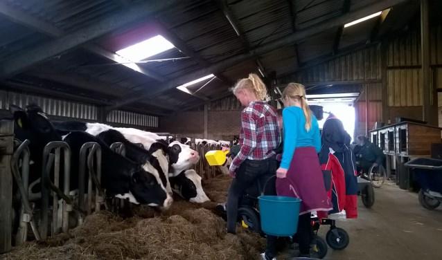 Leerlingen krijgen een rondleiding op Zorgboerderij de Weijdeblick en mogen de koeien voeren.