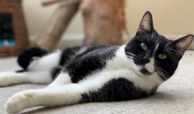 Boef rust uit van wat kattenkwaad.