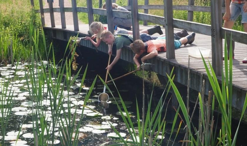 Kinderen vangen diertjes in het water. Er is een slootjesdag zondag 16 juni.