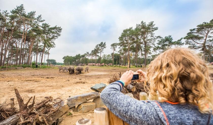 Met kinderen op pad in Noord-Brabant? Met deze zes tips van locals wordt datbezoek nóg leuker. FOTO: VisitBrabant