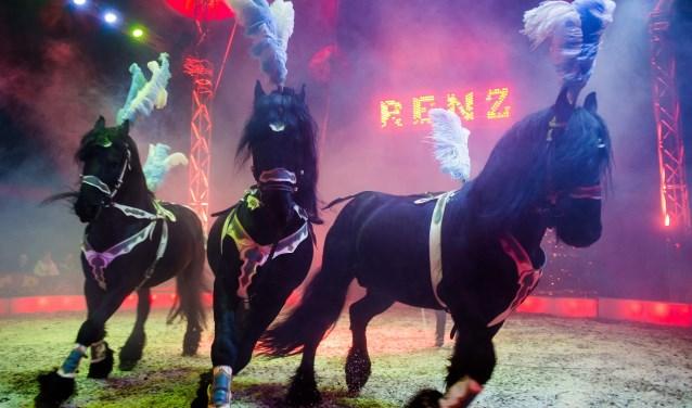 Er zijn veel paarden te bewonderen in de piste van Circus Renz Berlin), waaronder deze Friese paarden. (Foto: Circus Renz Berlin)