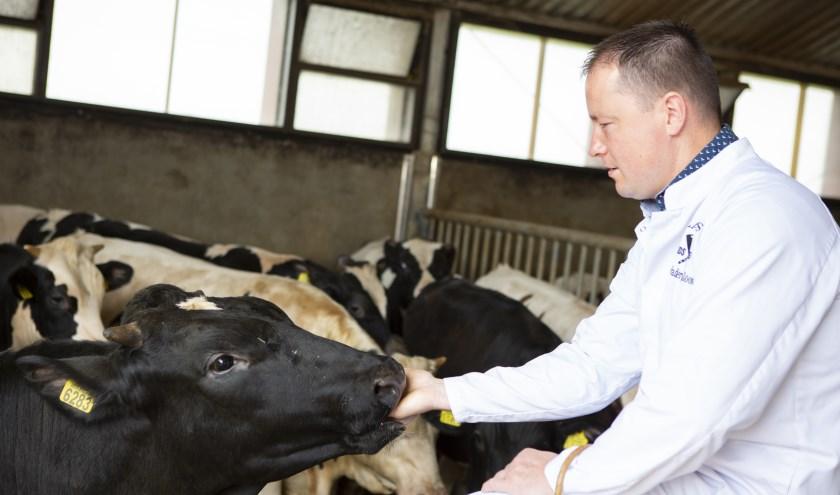 Rosékalfsvlees komt van stierkalveren, van de familie Blom uit Didam, die acht maanden oud zijn. (foto: PR)