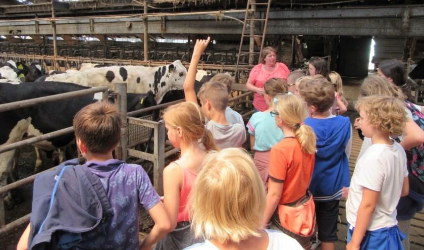 De kinderen kregen een rondleiding. (Foto: Privé)