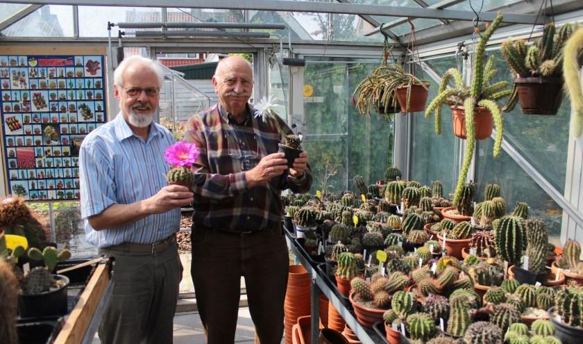 Evert Weijman (links) en Coert van Dijk zijn gepassioneerde cactusliefhebbers en kwekers. (Foto: Henk Jansen)