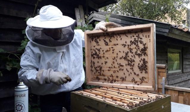 Bijen op en in een raat in Aad zijn achtertuin