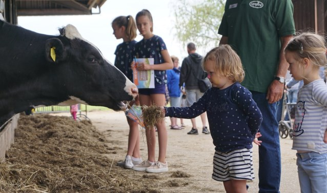Kom je ook koeien voeren?
