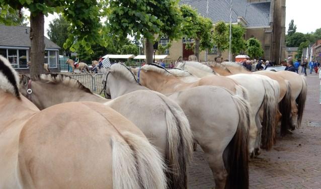 Zonder paarden geen paardenmarkt. Foto: Johan 't Hooft