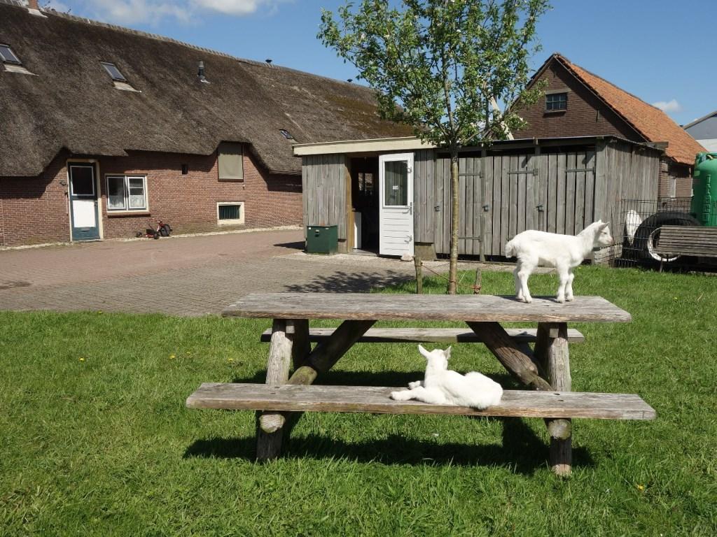 Het rustpunt bij boerderij Welgelegen  © Persgroep