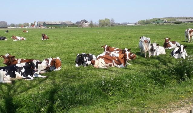 Op Tweede Pinksterdag kun je bij verschillende agrarische bedrijven in Hedel en Ammerzoden een kijkje achter de schermen nemen van 10.00 tot 17.00 uur.