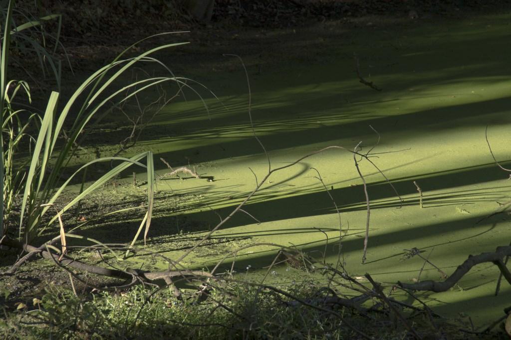 lichtstrepen op kroos Foto: foto: N.Pisuisse © Persgroep