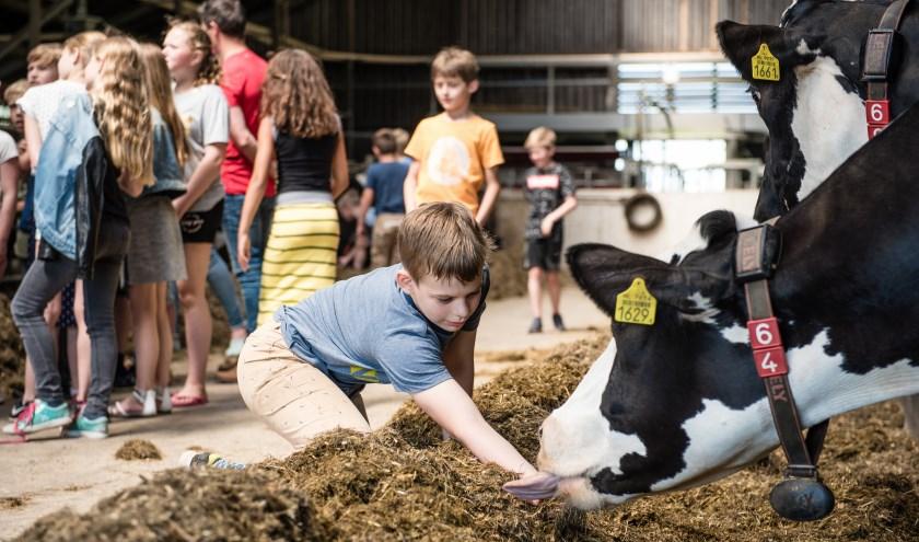 Wie kan beter vertellen over het boerenleven dan de boer zelf?(Fotograaf Ilse)