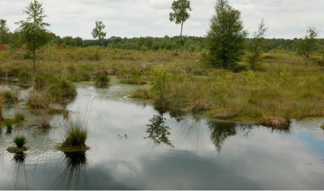 Het Aamsveen is een uniek stukje natuur. Hier vind je nog hoogveengebied met heide, beekbosjes en graslanden.