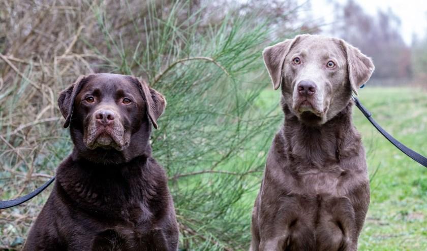 Wegens familieomstandigheden kon hun baasje helaas niet meer voor Harrie en Zip  zorgen en zo zijn ze in het asiel gekomen.