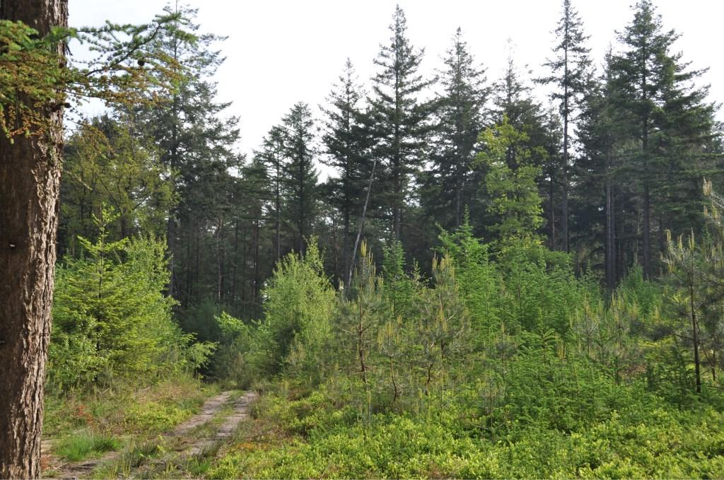 Kijk door de bomen, kom er van alles over te weten en zie het bos.  © Persgroep