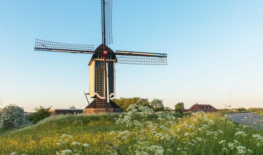 De Standerdmolen Batenburg, ten oosten van het stadje.