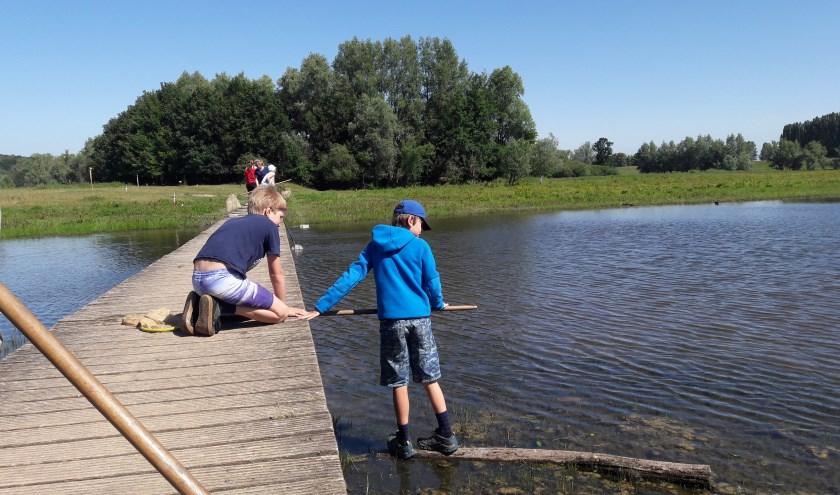 Onder begeleiding van IVN Het Groene Wiel leren de kinderen over het belang van de uiterwaarden, de effecten van klimaatverandering en de invloed van de mens en dieren op natuurontwikkeling.
