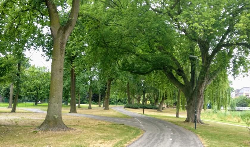 Meierijstad legt de basis voor bomenbeleid in Boomcafé's.