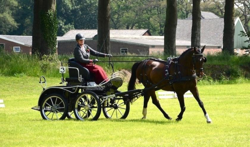 De Hamelandse Menners verzorgen op zondag 28 juli een KNHS menwedstrijd.
