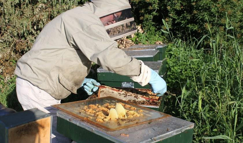 Tijdens de Open Imkerdag op zondag 14 juli geeft imker Jos letterlijk een inkijkje in de (bijen)kasten. Foto: Wendy van Lijssel