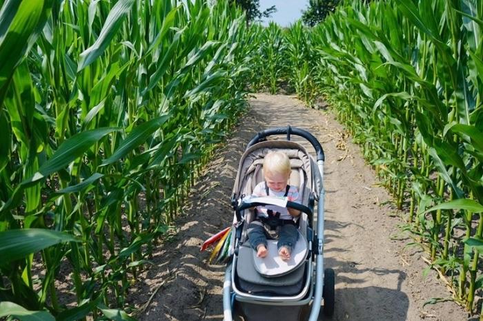 Op safari door het maïsdoolhof in Udenhout - Stadsnieuws Tilburg