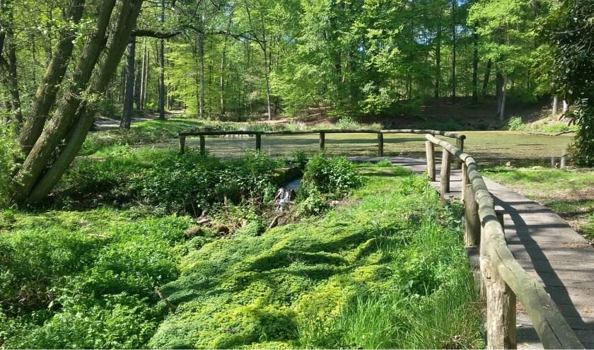 De bronnen en beken van het Springendal staan centraal tijdens een excursie van Staatsbosbeheer.