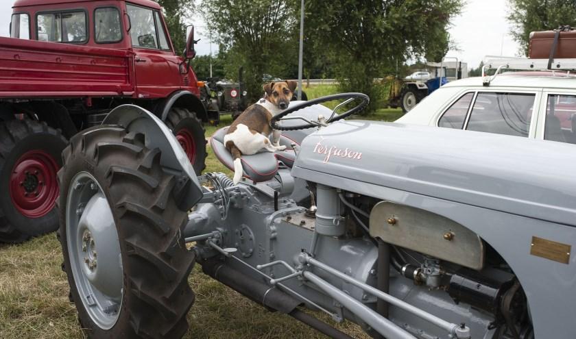 De hond Charly 'bewaakt' de oldtimer van Lucy van Eldik uit Dodewaard die de tractor een pronkstuk noemt. (foto: Ellen Koelewijn