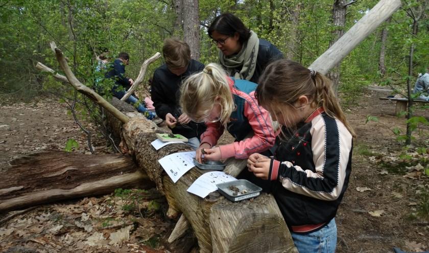 Kinderen mogen bij de Nature Experience natuuropdrachten doen. (Foto: Natuurmuseum Holterberg)