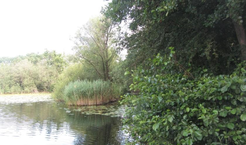 De Breuly is naast zwemwater en visplas ook een leefgebied voor bijzondere dieren en planten. (foto: PR)