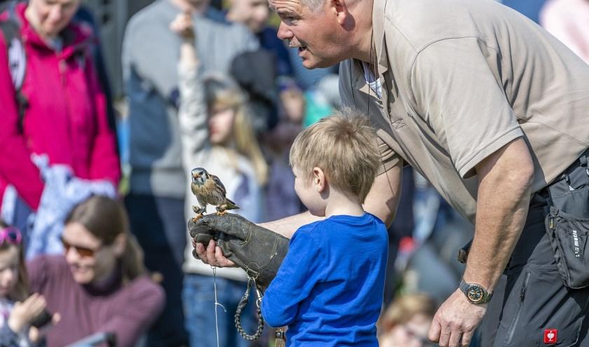 Grote én kleine roofvogels zijn zondag te zien in Tierpark Nordhorn. Foto: Franz Frieling