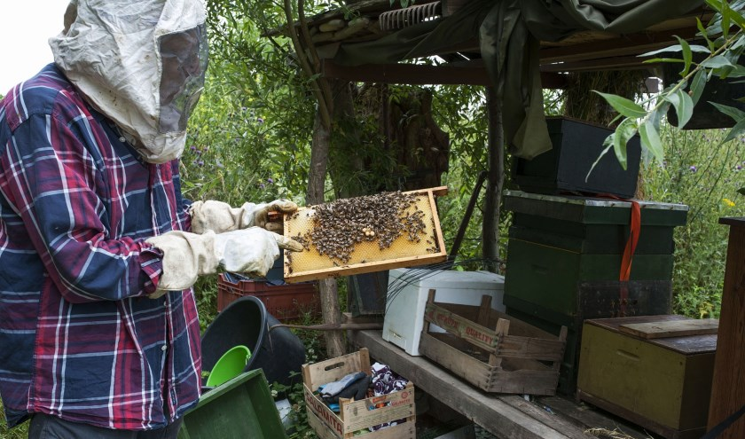Leo Starink showt het bijenvolk en hun bezige leventje.