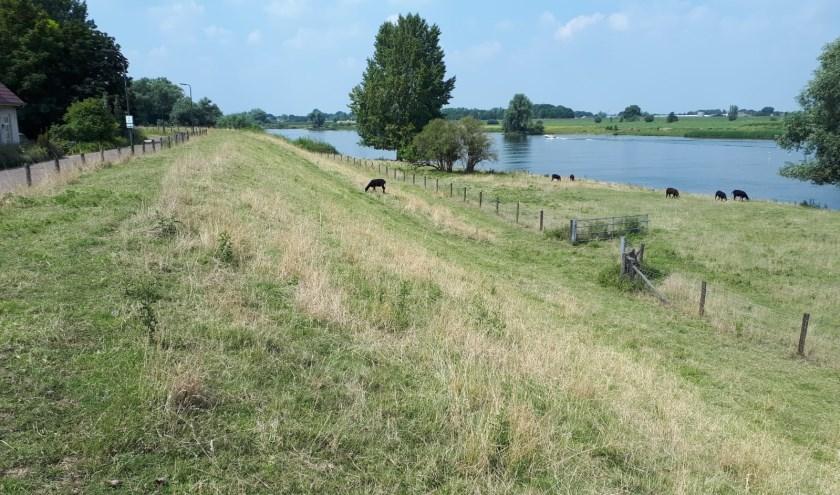 De Maasdijk