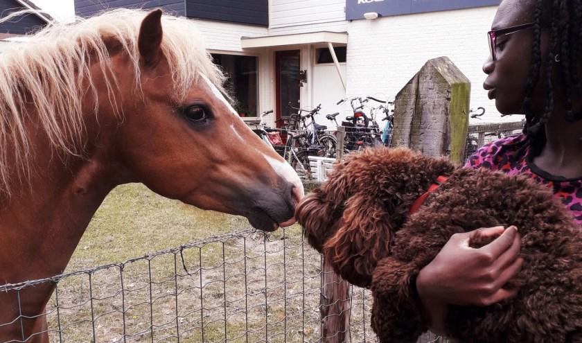 Kétura lagerwaard met Milo en pony Billy