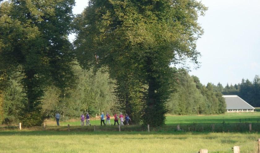 Speciaal voor de toerist en de thuisblijververzorgt Wandelkring DIO op zes woensdagavonden zomeravondwandelingen.