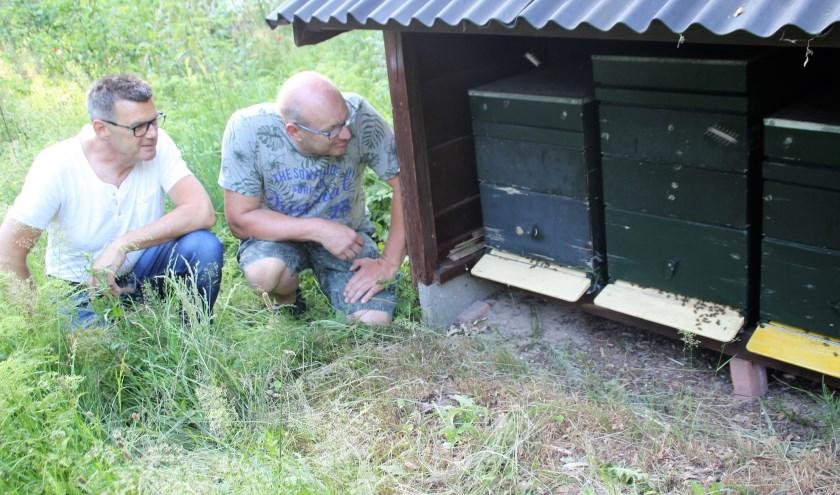 Jacob Bouw en Reinard Olthuis bekijken de bijen in de kasten in de Bijennatuurtuin. (Foto: Dick Baas)