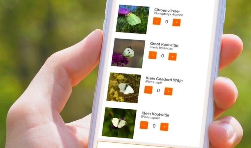 Iedereen kan zijn of haar waarnemingen van vlinders in de tuin direct doorgeven via de app Vlindermee of de website www.vlindermee.nl.